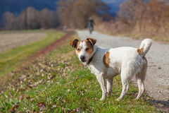 Cute dog waiting for have fun Stock Image