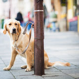 Cute dog waiting patiently for his master