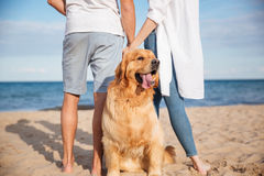 Cute dog walking with young couple on the beach Stock Photos