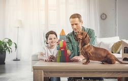 Cute dog watching how her owners building little house royalty free stock photography