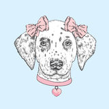 Cute dog wearing a collar with a heart and two bows. Beautiful dalmatian painted by hand. Vector illustration for a card or poster. Print on clothes Royalty Free Stock Photos