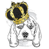 Cute dog wearing a crown . Vector illustration. Design element for printed products or prints on clothes and accessories . Stock Photos