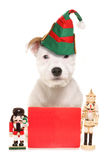 Cute dog wearing elf hat with blank sign Stock Image