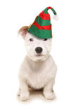 Cute dog wearing elf hat Royalty Free Stock Photos