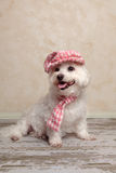 Cute dog wearing hat and scarf Royalty Free Stock Photography