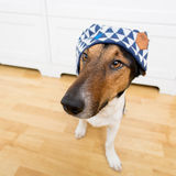 Cute dog wearing hat Royalty Free Stock Photography