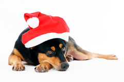 Cute dog wearing Santa hat Royalty Free Stock Photos