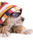 Cute dog on a white background. Dressed up with clothes Royalty Free Stock Photos