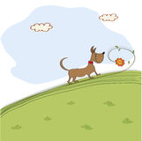 Cute dog who smells a flower on meadow. Vector illustration Stock Photography