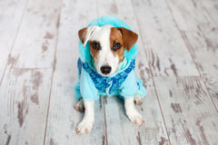 Cute dog in winter clothes Stock Photography