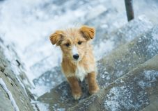 Cute dog in the winter outdoors. Focus on the dog face royalty free stock photography