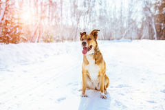 Cute dog in winter. Royalty Free Stock Photo