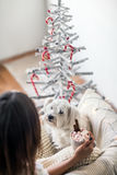 Cute dog and woman in christmas decorated home Royalty Free Stock Images