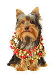 Cute dog with xmas ornament Royalty Free Stock Photography