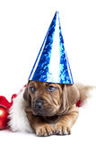 Cute doggy and Christmas decoration Stock Photos