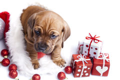 Cute doggy and Christmas decoration Stock Photography