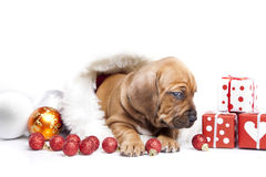 Cute doggy and Christmas decoration Stock Images