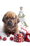 Cute doggy and Christmas decoration. Young cute doggy and Christmas decoration Royalty Free Stock Images