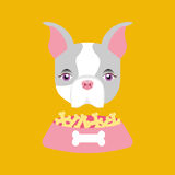 Cute doggy girl with food bowl Stock Photography