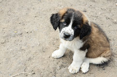 Cute doggy Stock Photo