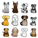 Cute dogs Stock Photos