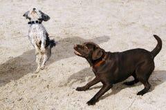Cute Dogs stock photo