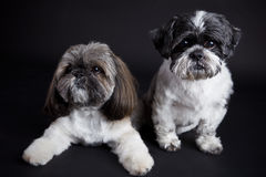Cute dogs on black background Stock Photos