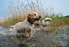 Cute dogs having fun. In the water Stock Photo