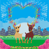Cute dogs in love Royalty Free Stock Photo