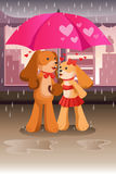 Cute dogs in love Royalty Free Stock Photos