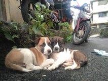 Cute Dogs. My Cute dogs stock photos
