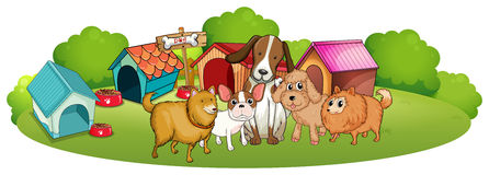 Cute dogs outside the doghouses Stock Photo