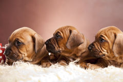 Cute dogs resting on white blanket. Three cute dogs resting on white blanket Royalty Free Stock Photos