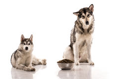 Cute dogs and their favorite food on a white background Stock Photo