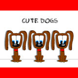 Cute dogs. Three brown cute dogs at white background Stock Images