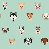 Cute dogs vector pattern. Illustrations on colored background Stock Images