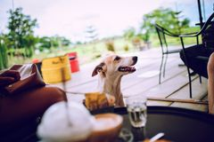 Cute dogs waiting for food. From people stock image