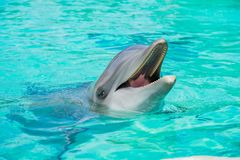 Cute Dolphin in the famous SeaWorld. At San Diego stock photo