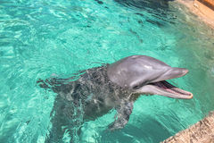 The cute dolphin Royalty Free Stock Photo