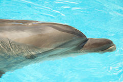Cute Dolphin Stock Photo