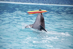 Cute dolphins during a speech at the dolphinarium Royalty Free Stock Images