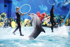Cute dolphins during a speech at the dolphinarium. A cute dolphins during a speech at the dolphinarium royalty free stock photos
