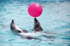 Cute dolphins during a speech at the dolphinarium Royalty Free Stock Photo