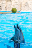 A cute dolphins during a speech at the dolphinarium, Batumi, Geo Stock Images