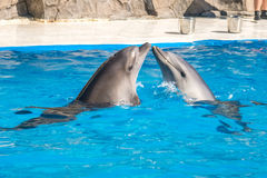 A cute dolphins during a speech at the dolphinarium, Batumi, Geo Stock Photo