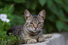 Cute domestic cat Stock Image