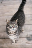 Cute domestic cat stock photography