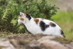 A cute domestic cat prowling on a rock. Stock Photo