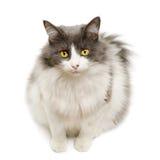 Cute domestic cat Royalty Free Stock Photos