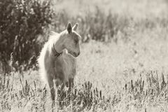 Cute domestic goat grazing in meadow. stock photos